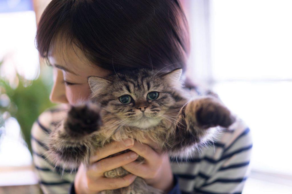 猫を抱きかかえながら寝室へ